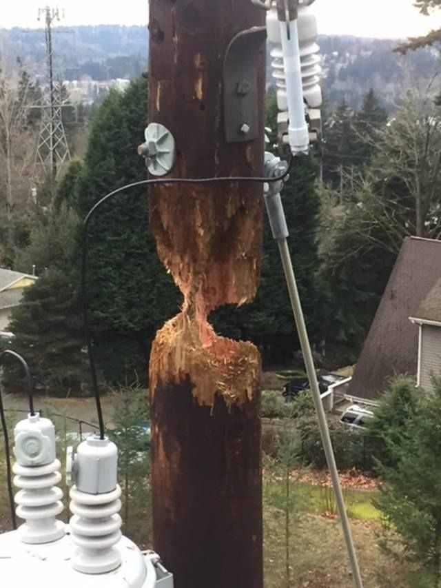 The Snohomish County Public Utility District recently posted an interesting photo on their Facebook page. It showed a wooden pole almost brought down by a busy woodpecker.