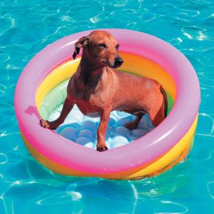 Tips to help the pets beat the heat #Pets #PetLife #SouthAfrica