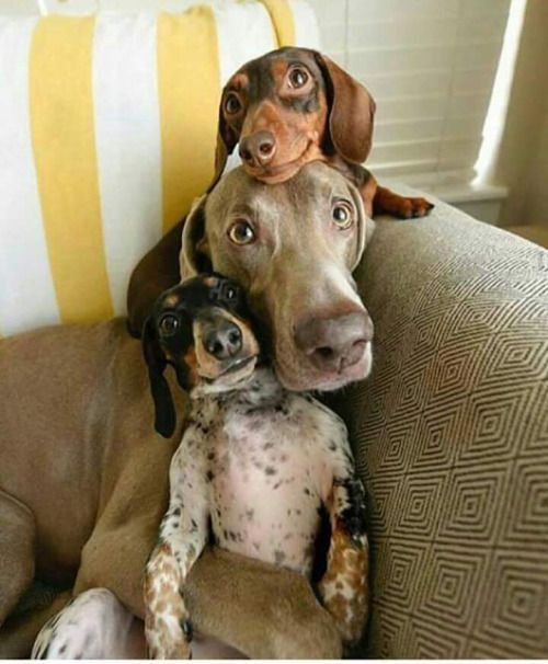 Too cute!!! Pup stack!