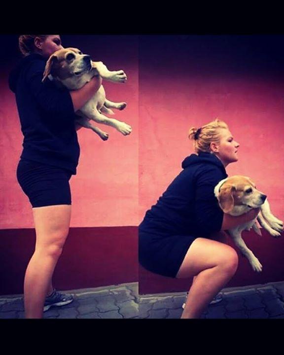 #magyar #beagle #dog #workout #diet