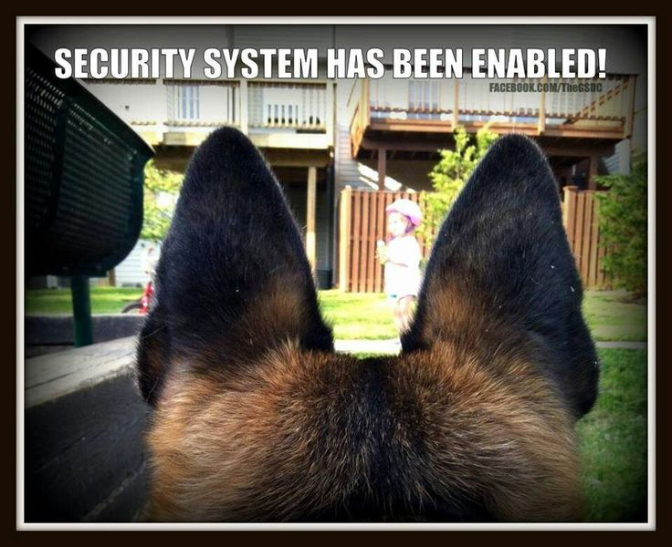 German Shepherds are the best!  :)