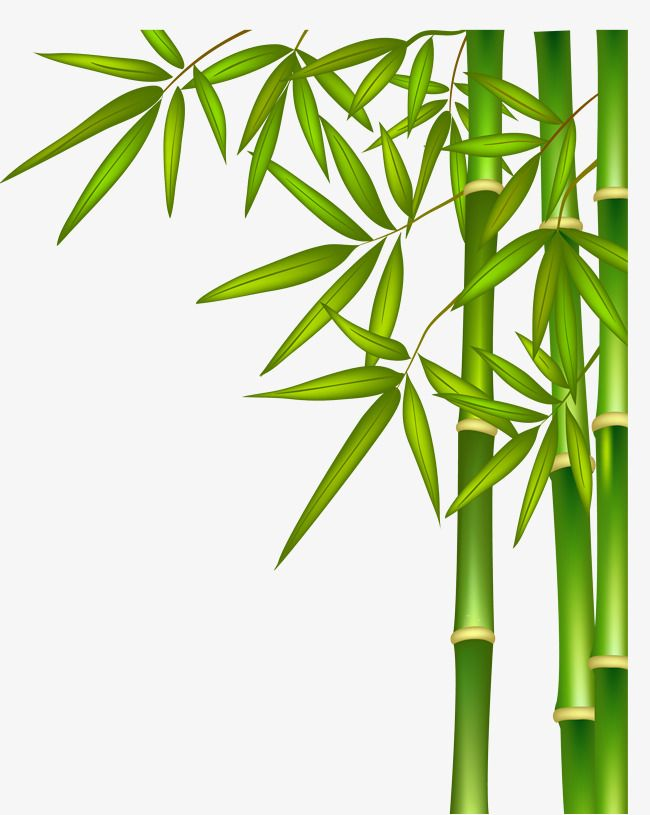 green bamboo green vector bamboo vector png transparent clipart image and psd file for free download bamboo art leaf wall art tree wall art bamboo art leaf wall art