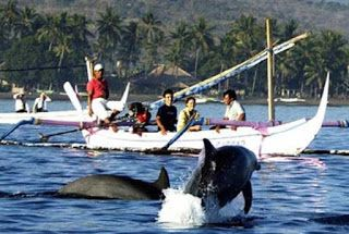 photo lumba-lumba di pantai lovina terbaru