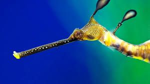Afbeeldingsresultaat voor tropische vissen wallpaper