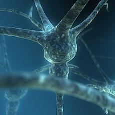 Cada neurona tiene unas mil mutaciones únicas que la diferencia de sus vecinas