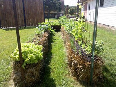 Another great site on straw bale gardening. I'm really considering doing this.(ch)Straws Bale Gardens, Gardens Ideas, Gardens Yards, Bale Gardeningth, Bale Gardening Th, Flower Gardens, Gardens Stuff, Straw Bales, Gardens Growing