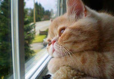 Imagenes de gatos - gatitos: Imagenes de gatos: Gatito melancolico  [23-9-17]
