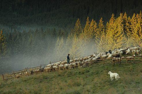 Pasterstwo w Tatrach i innych górach Polski «  Link to Poland