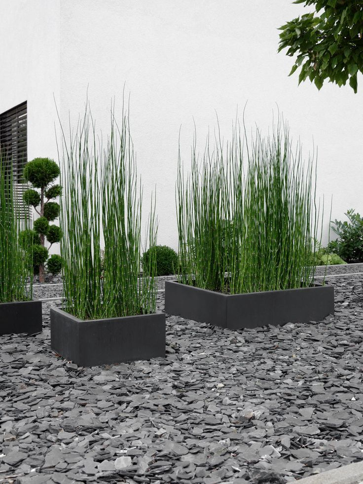 Front garden design with horsetail