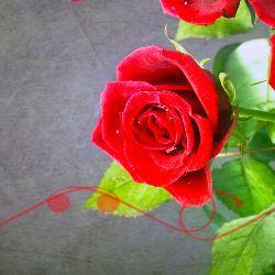Astazi e ziua ta... e ziua ta de nastere. La multi ani! http://ofelicitare.ro/felicitari-de-la-multi-ani/e-ziua-ta-de-nastere-747.html