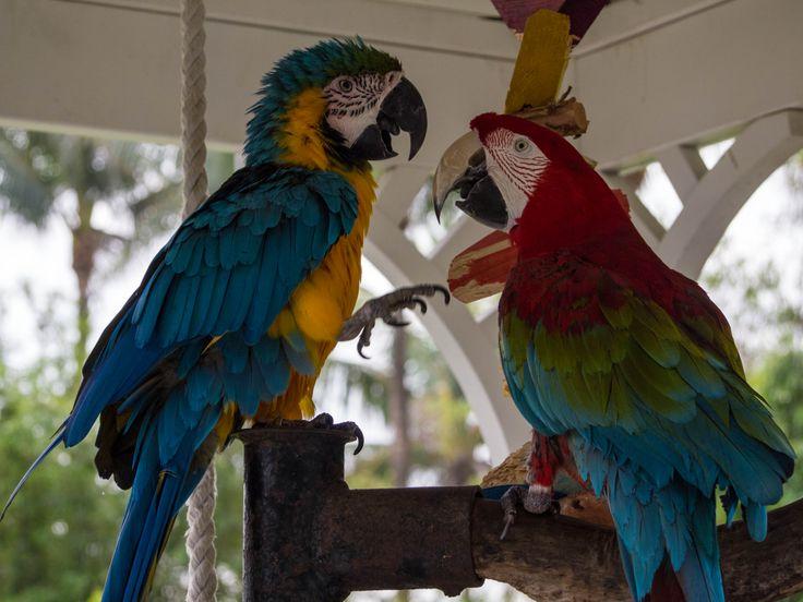Even the birds adhere to Miami's bright color scheme.