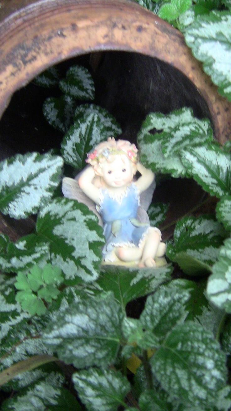Fairy accommodation at Rockvale  Gardens.