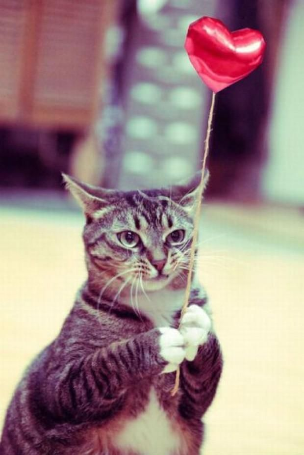 """""""It's your birthday party, she said. There will be tuna and cheezburger, she said.""""  Photo via Oooh Cat"""