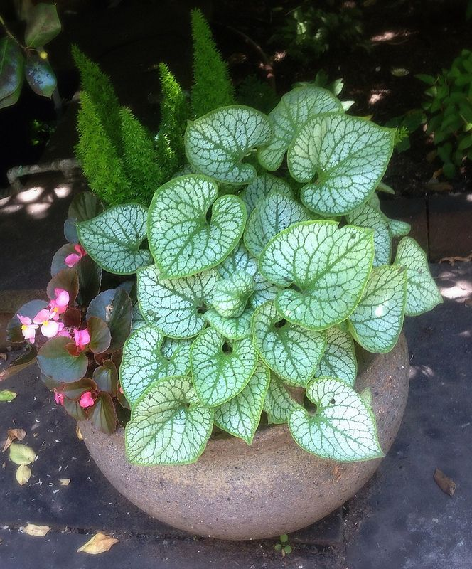 pot by Pruning by Design | cool shade spring and summer Brunnera, Begonia, Foxtail Fern
