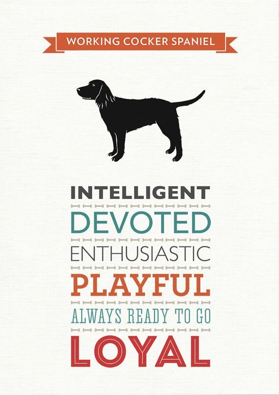 Working Cocker Spaniel Dog Breed Traits Print by WellBredDesign