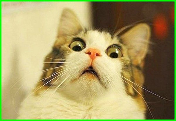 Wallpaper Lucu Imut Kucing