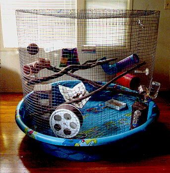 Heather's Moving Castle: Homemade rat cage and rat update