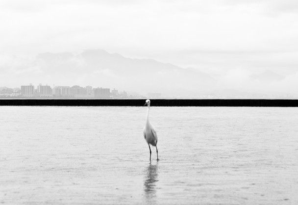 Photo and caption by Marcin Ryczek The photo is taken and refers to the special place for all humanity, the city of Hiroshima. Hiroshima just like the mythical phoenix bird - a symbol of eternal rebirth. Location: Hiroshima, Japan