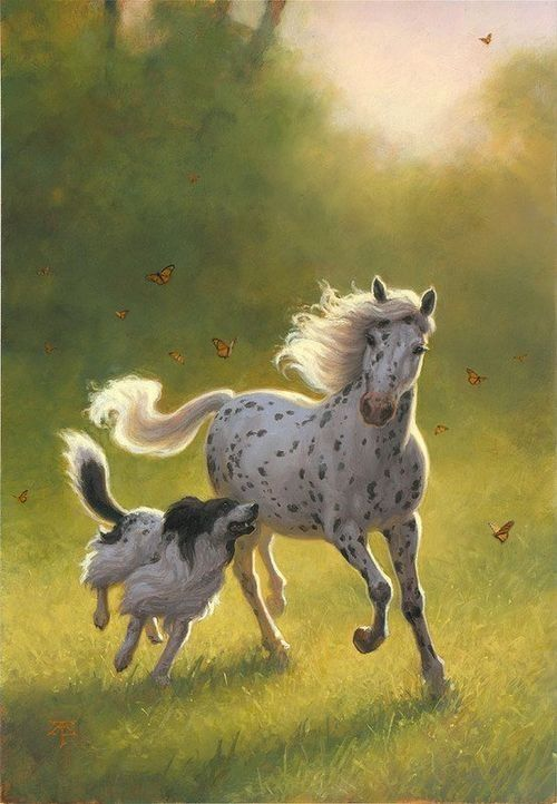 Is A Horse S Sight Better Than Of Dogs
