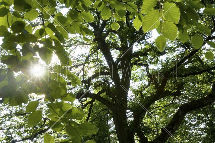 Forest Scene - Fototapeter & Tapeter - Photowall