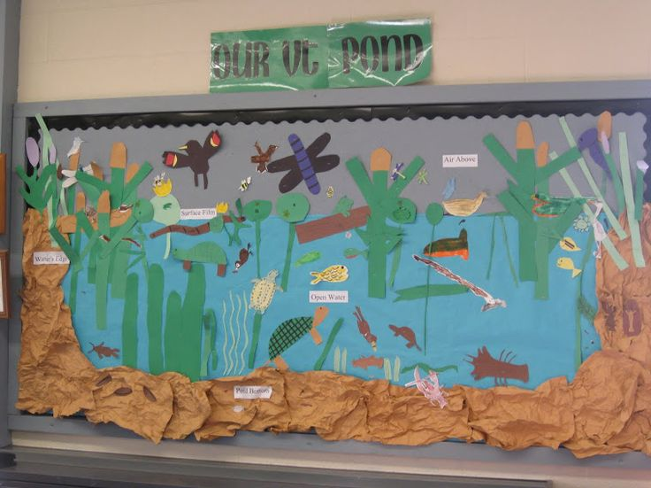 This teacher had her class create a bulletin board display on a pond unit. This culminating project can be adjusted to create a marine ecosystem, where students can be responsible for researching, typing, and printing information about animals, food chains, biomes, and other marine subjects. This is a great activity to foster student's creativity and collaboration, which is aligned with cc standard SL.4.1.  This was pinned from…