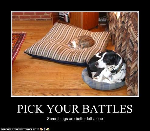 lol - cute!: Cats, Animals, Dogs, Pet, Pick, Funnies, Funny Animal