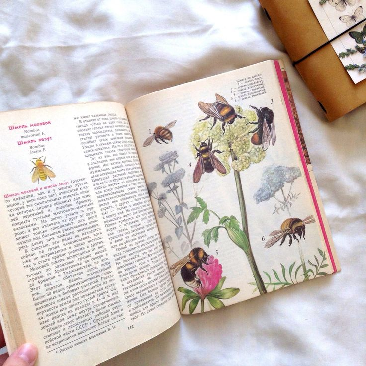 Vintage book about rare insects , butterflies,  bees