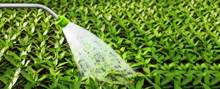 Nitrato de amonio: el fertilizante para fertirriego  http://www.infotopo.com/exteriores/jardin/nitrato-de-amonio-fertilizante/
