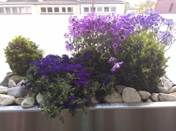 fioletowa kompozycja