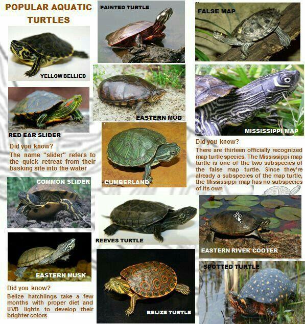 Pin By Rafael Correa On Turtles Turtle Care