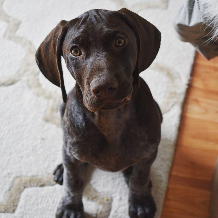 Dog Rubbing Ears On Rug: Best 25+ Medium Dog Breeds Ideas On Pinterest