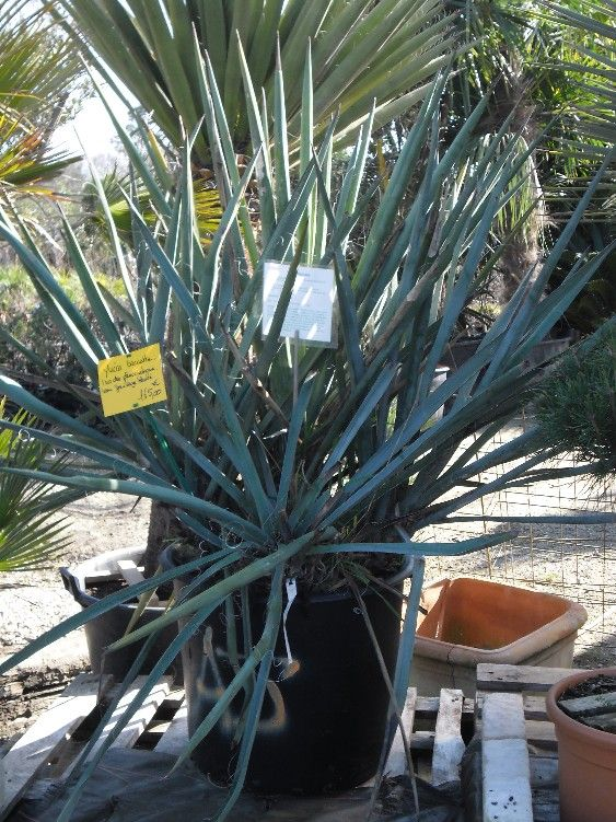 les 25 meilleures idees de la categorie plantes With superb idee deco exterieur jardin 3 albizia plantation taille et entretien