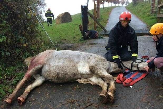 "Traumatised owner of horse that was trapped in Exeter cattle grid warns of potential ""death traps"" 