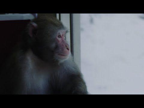 温泉には目がない猿も上京!『スノーモンキー東京へ行く』Web movie