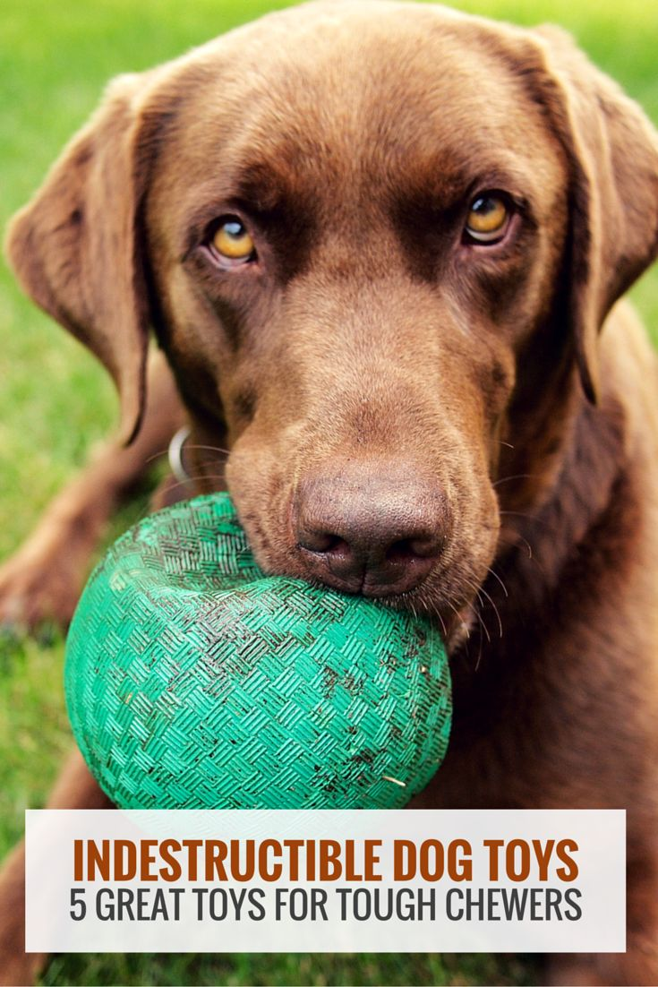 Indestructible dog toys - our top 5 picks for tough chewers. @KaufmannsPuppy