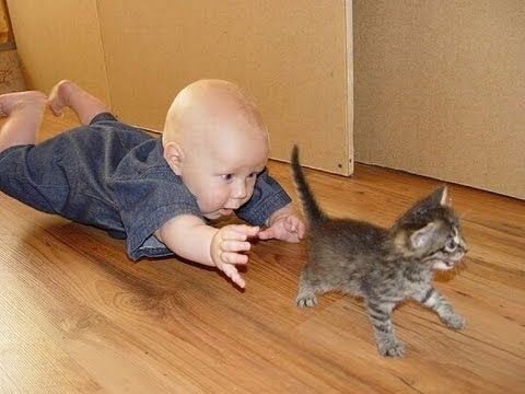 Лучшая подборка Кошки и Дети!Приколы с Детьми! / Funny Videos Cats and K...