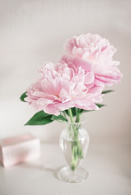 Pink peonies, Peonies and Small vases on Pinterest