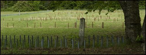 how to clear genealogy roadblocks search on bing