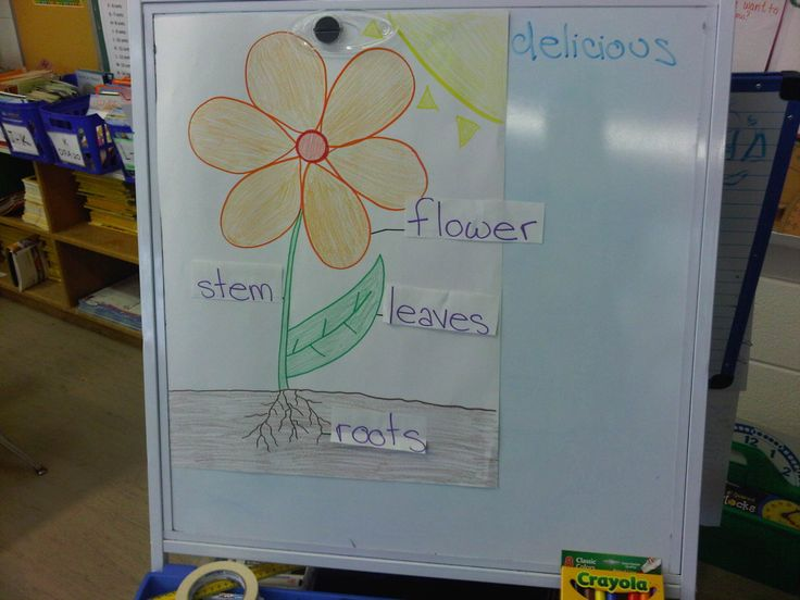 Parts of a Flower Anchor Chart