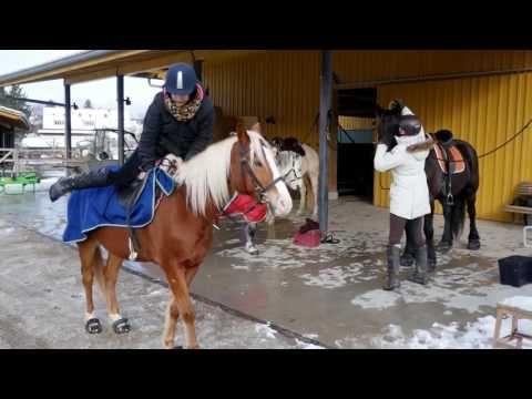 AVANT @ horse farms