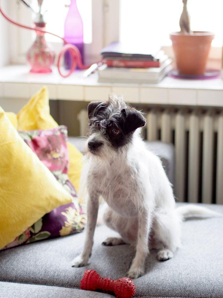 Lulu the dog | Laura's home | Photo: Pupulandia