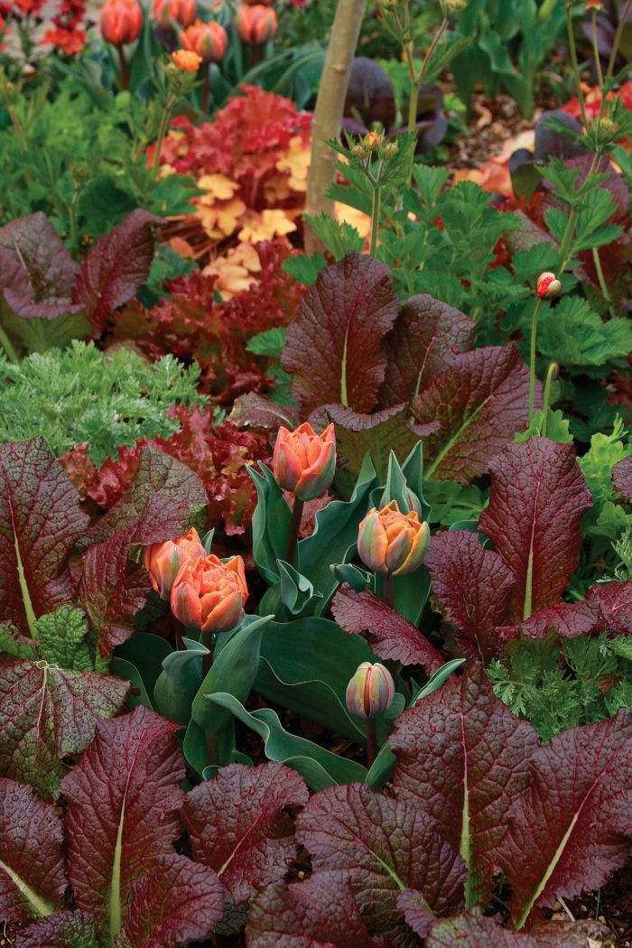 12 Spring Bulb Designs To Plant Now With Images Spring Garden Flowers