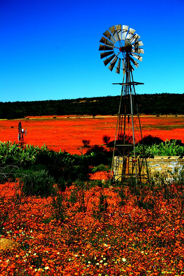 The Northern Cape has it's own appeal, #Namakwaland is breath taking...