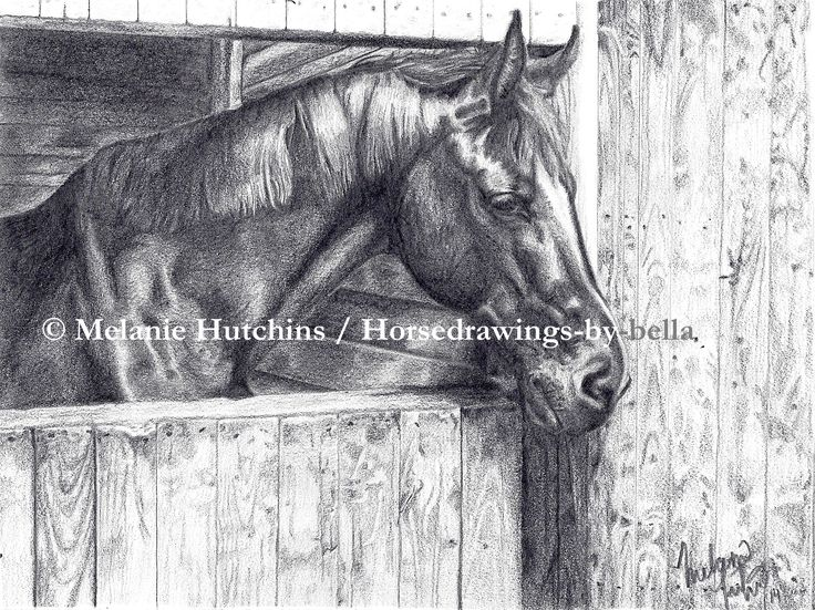 The Beautiful Black mare Celtic. Check out the speed drawing here: https://www.youtube.com/watch?v=MVL2m41ALNY Copyright Melanie Hutchins / Horsedrawings-by-bella  Follow me on Facebook: https://www.facebook.com/Horsedrawingsbybella.MelanieHutchins Twitter: https://twitter.com/MelHTheArtist YouTube: https://www.youtube.com/channel/UCZDEjNKuowAo92BhnMWWBzA
