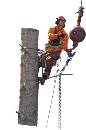 Kelowna Tree Service provide by action tree.