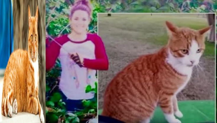 This Washington Vet Lost Her Job After She Did This Unspeakable Act To An Orange Tabby