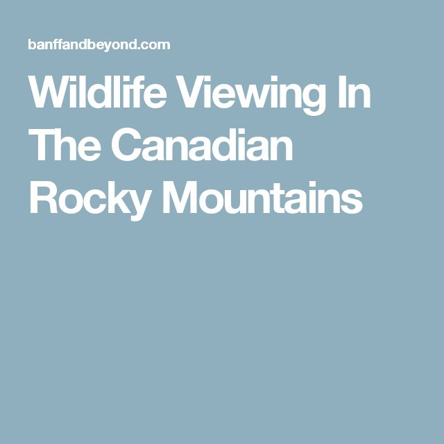 Wildlife Viewing In The Canadian Rocky Mountains