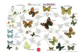 Afbeeldingsresultaat voor praatplaat insecten