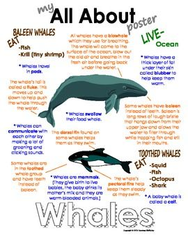 My All About Whales Book - Ocean Animal Unit Study