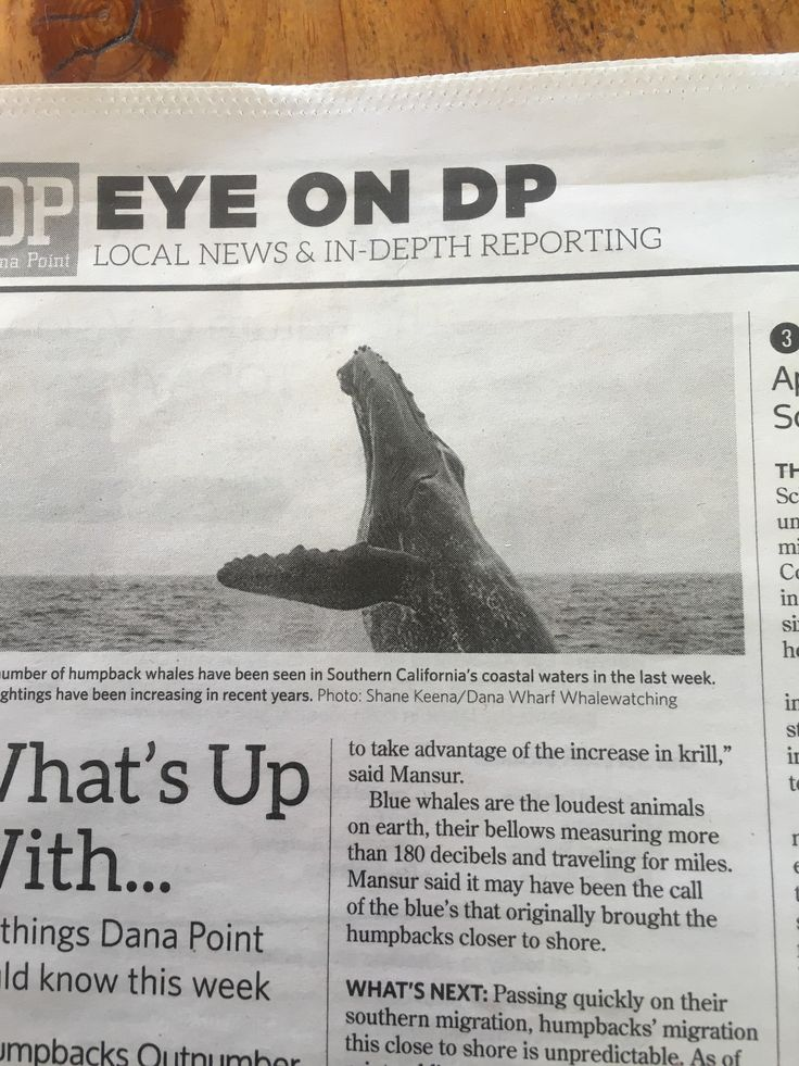 This picture of a humpback whale in the local paper looks like a terrifying sea creature
